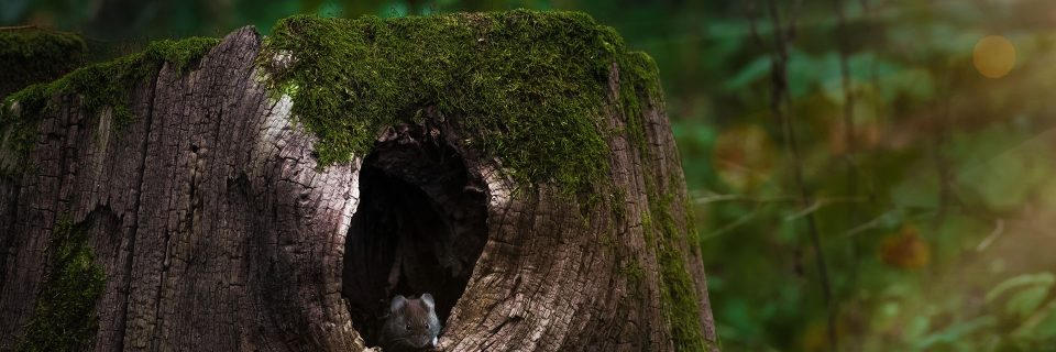 old stumps attract critters